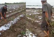 ભારે વરસાદથી રાજકોટ અને જામનગર જિલ્લાના ખેડૂતોને સૌથી વધુ નુકસાન